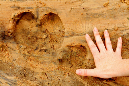 A hippopotamus foot print in the sand next to a female human adult