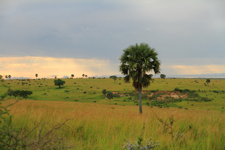 The landscape of Murchison Falls National Park Stock Photo