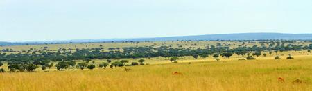 The Ugandan savannah in Murchison Falls National Park as a panoramic photo.
