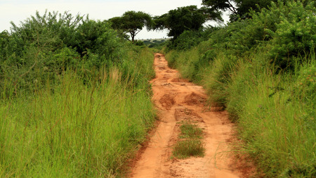 A dirt road through the jungle of Murchison Falls National Park in Uganda.