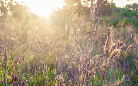 An image of a wildlife preserve taken as the sun rises over the meadow in the early morning. The tall grass captures the suns rays creating a vibrant image.