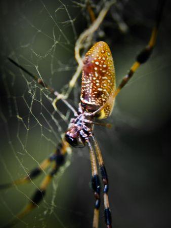Banana Spider Banco de Imagens