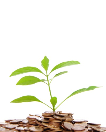 Green tree on money land Stock Photo - 10627060