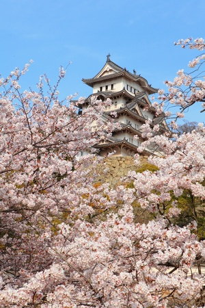 Japanese castle and Beautiful cherry blossoms  Stock Photo - 10749925