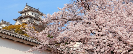 Japanese castle and Beautiful cherry blossoms