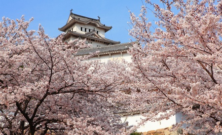 japan sky: Japanese castle and Beautiful cherry blossoms