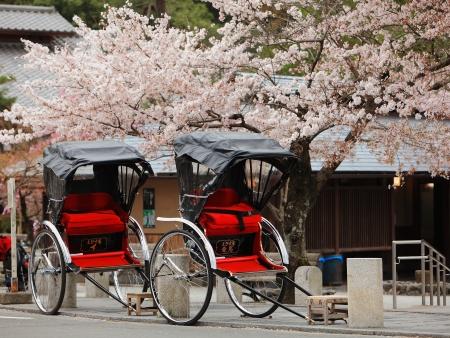 arbol de cerezo: Japón ricksha con flores de cerezo Foto de archivo