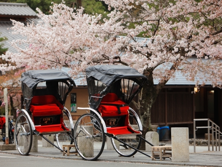 japan sky: Japan ricksha with cherry blossoms tree
