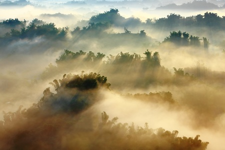 natural scenery: morning sunshine with fog