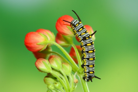 cocoon: red flower and cute caterpillar Stock Photo