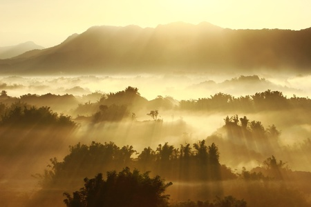 mists: sunshine on the morning mist