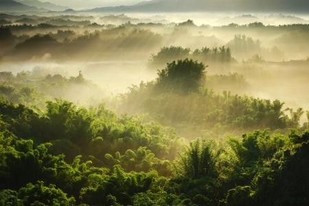 sunshine on the morning mist