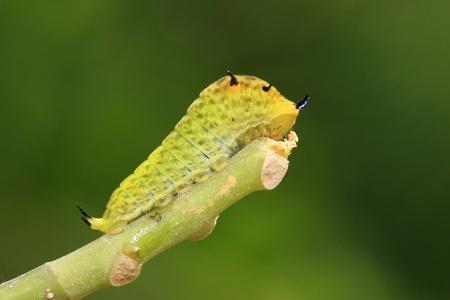 Caterpillar photo