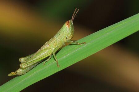 praying mantis Stock Photo - 10869237