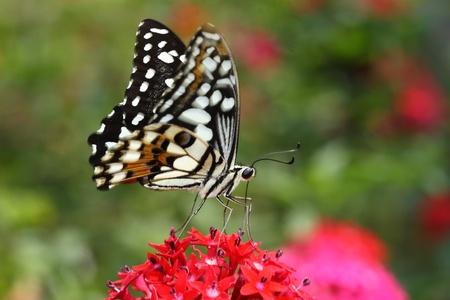 美しい赤い花と緑の背景と蝶を飛んで