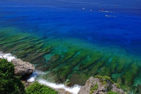 pristine corals: Beautiful coral