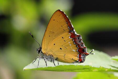 entomological: cute butterfly