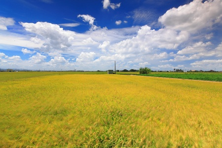 sunny day with sea of paddy and grass Stock Photo - 10778928