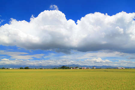 sunny day with sea of paddy and grass Stock Photo - 10771494