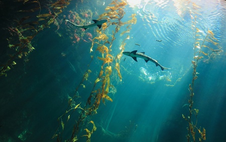 shark teeth: Peque�o tibur�n en el oc�ano con rayo de luz incre�ble