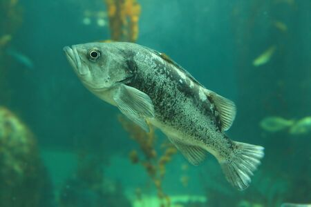 Beautiful tropical fish Stock Photo - 11189195