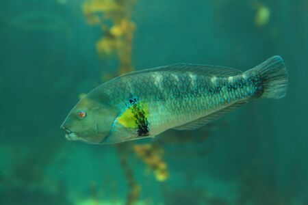 Beautiful tropical fish Stock Photo - 11189248