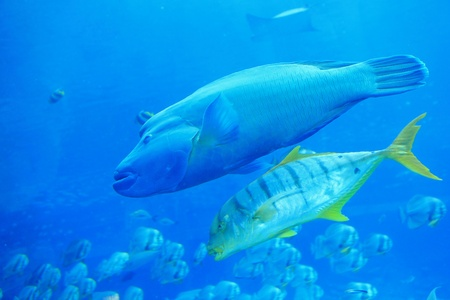 beautiful big two tropical fish in the ocean Stock Photo - 11189201
