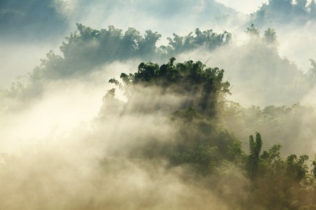 sunshine on the morning mist with bamboo and hill photo