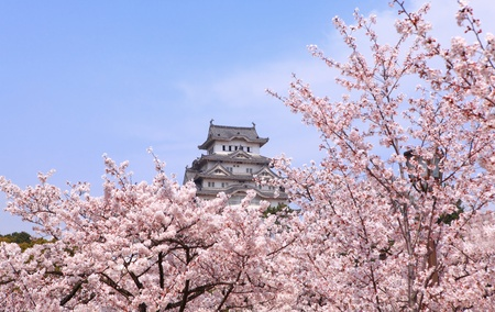 ninja ancient: Japanese castle and Beautiful pink cherry blossom shot in japan