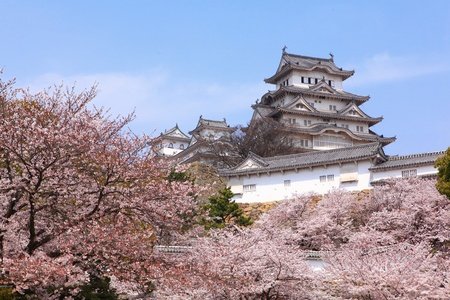 osaka castle: Japanese castle and Beautiful pink cherry blossom shot in japan