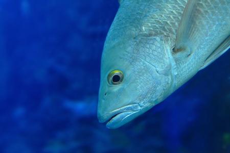 Beautiful tropical fish closeup Stock Photo - 11810296