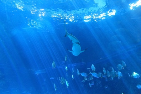 school of fish: the sight of sharks back