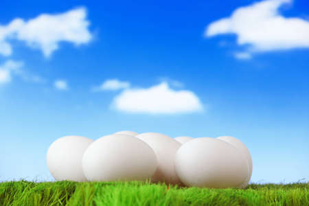 pure white eggs on green grass with blue sky and cloud background photo