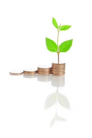 nt: money stairs and green plant isolated on white background, for finance concept