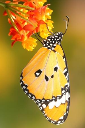 아름다운 꽃과 화려하고 아름다운 나비