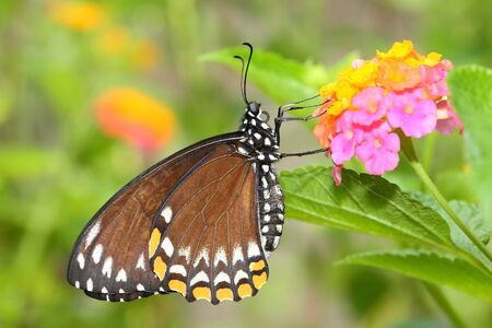 Beautiful butterfly with flower and green background photo