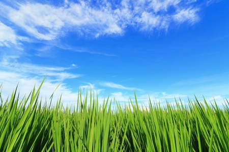green grass and blue sky and white cloud in Spring Stock Photo - 13481135