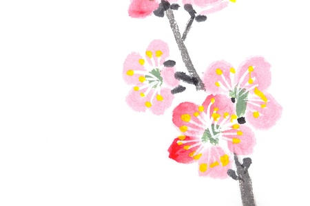 Traditional Chinese painting of flowers, plum blossom close up white background Stock Photo - 14097555