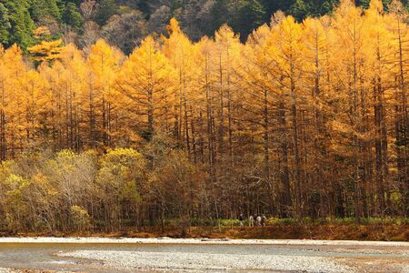 Amazing beautiful forest in autumn with mountain, shot in japan, asia photo