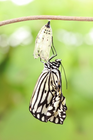 transmute: amazing moment about butterfly change form chrysalis