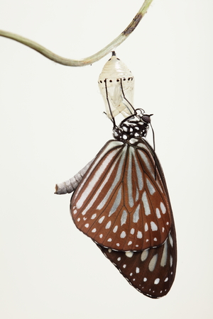 transmutation: amazing moment about butterfly change form chrysalis