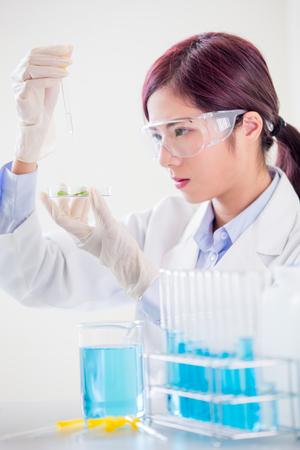 Wissenschaftlerin nehmen Petrischale und Pflanze im Labor