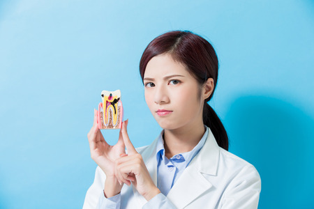 woman dentist take decay tooth model on the blue background