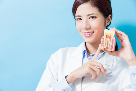 woman dentist take health tooth model on the blue background