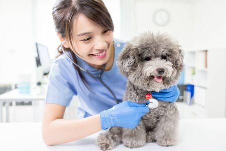 Young female veterinarian doctor listen to dog with stethoscope Standard-Bild