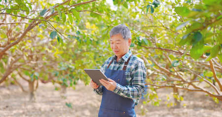 agriculture concept-asian senior farmer man read or analysis a report on digital tablet in orchard