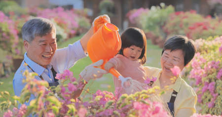 Authentic shot of asian retired grandparent are watering plants with their granddaughter in the garden