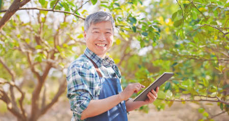 agriculture concept-asian senior farmer man is using digital tablet computer to analysis data and smile at you in orchard