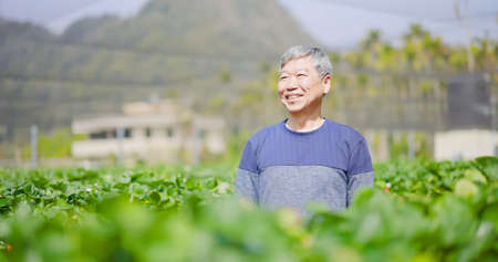 asian senior agronomist is carefree and smiling in strawberry greenhouse Banco de Imagens