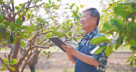 agriculture concept-asian senior farmer man is using digital tablet computer to analysis data in orchard Banco de Imagens